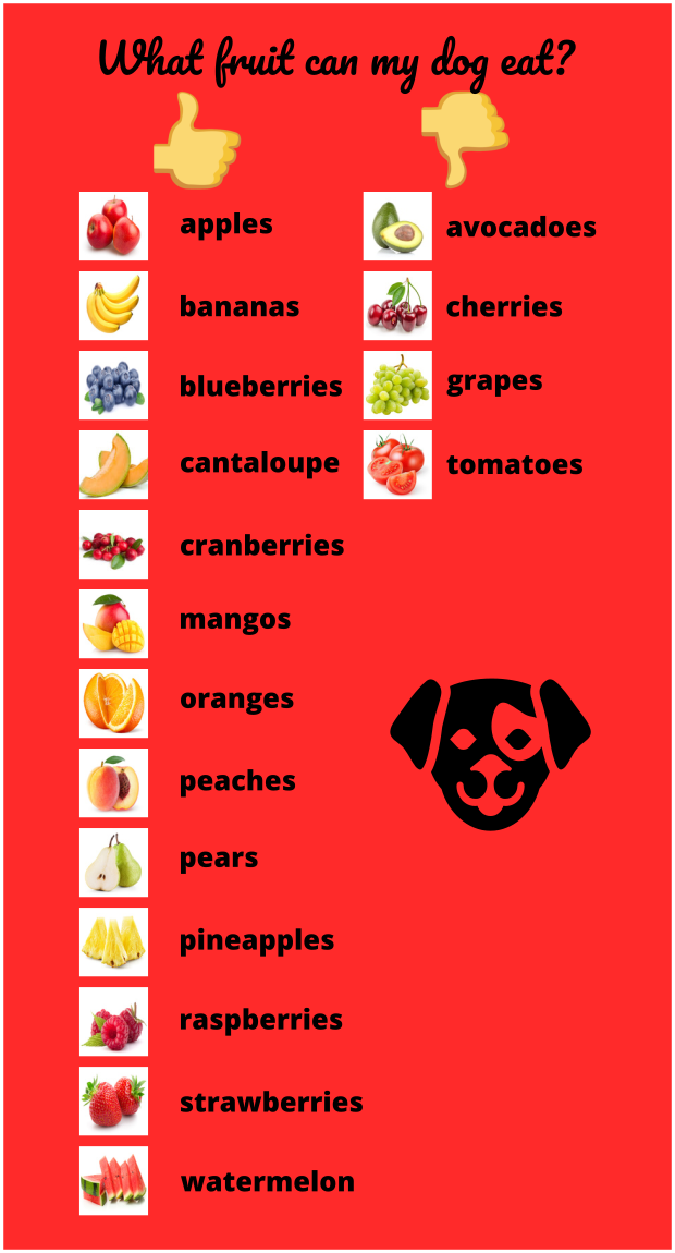 What Fruit Can a Dog Eat? Infographic