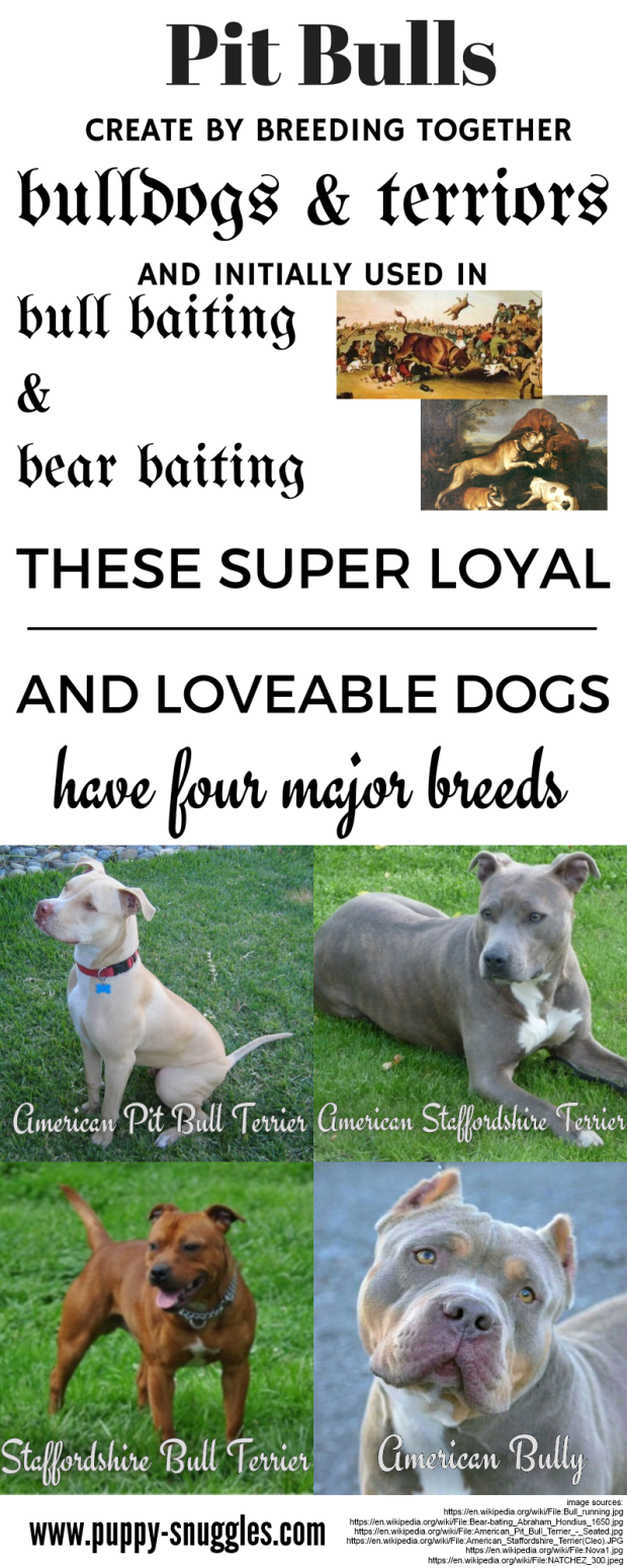 The Four Most Common Pit Bull Dog Breeds Infographic